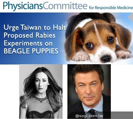 國際反對聲浪:不要進行殘忍的米格魯狂犬病實驗